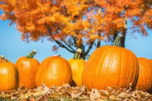 fun fall activities for teenagers